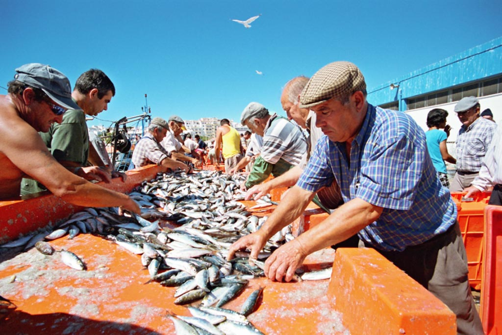 western-algarve-fish-market